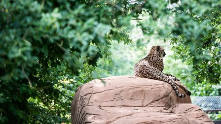 A one-way system at the zoo will remain in place to help keep people apart Picture: SARAH LUCY BROWN