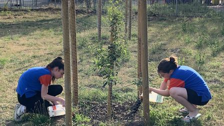 Sisters from Martlesham District Guides Units watering young fruit trees in Birhgt's Orchard in Mart