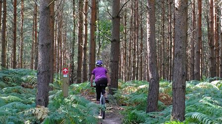 Tunstall Forest's Viking Trail Picture: Stephen Squirrell