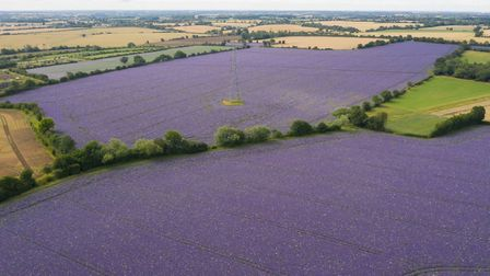 Fields of echium and borage in full flower in Thaxted Picture: JOE GIDDENS/PA WIRE