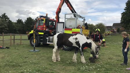 The horse became stuck under a fence near Sudbury Picture: SUFFOLK FIRE AND RESCUE SERVICE