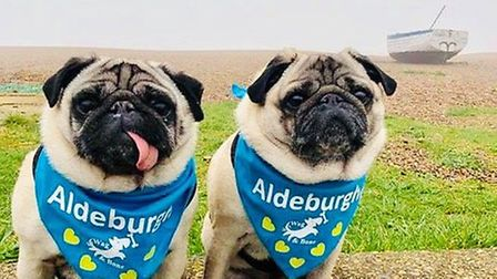 A pair of pugs showing off their neckerchief collars from Wag & Bone Picture: Wag & Bone