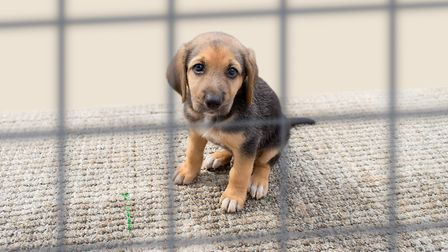 Dog's Trust is anticipating around 40,000 dogs to be handed over to shelters once lockdown is over P