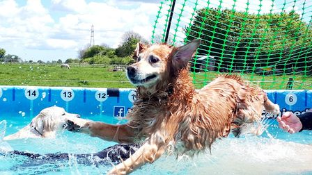 Like a duck to water! Picture: Canine Dip and Dive