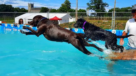 A pair of dogs catching some air in the pool Picture: Canine Dip and Dive