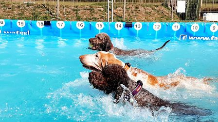 Three swimming dogs Picture: Canine Dip and Dive