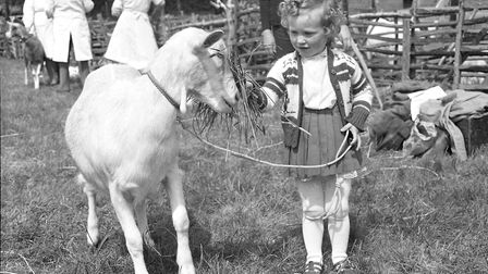 A little girl with a goat at the South Suffolk Show in May 1964. Do you know her? Picture: ARCHANT