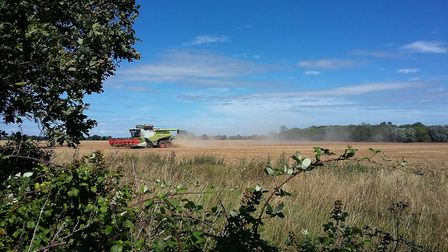 Pea harvesting in Elmswell Picture: DAVID LAMMING/IWITNESS