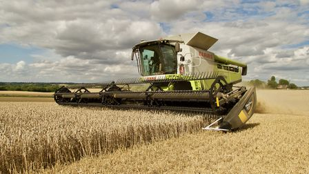 A combine at work in Hadleigh: farmers are reporting startlingly wide variations in yields Picture: