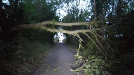 A number of trees blocked New Street in Framlingham. Picture: MAX SCOTT