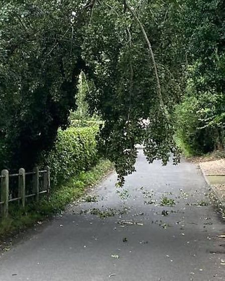A tree is hanging in the road after falling onto a power line in Mill Hill, Capel St Mary. Picture: