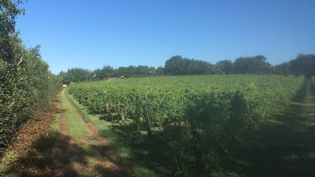 Valley Farm Vineyards in Wissett, which has scooped an internatiional silver award for one of its wi