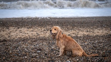 A dog on the beach at Dunwich, near The Ship pub Picture: CHESTNUT GROUP