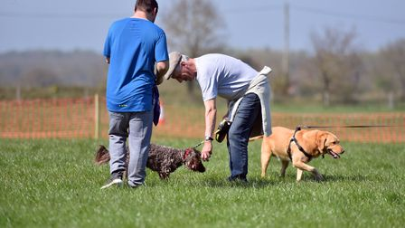 Centre Paws in Wymondham has lots of facilities for dogs Picture: ARCHANT