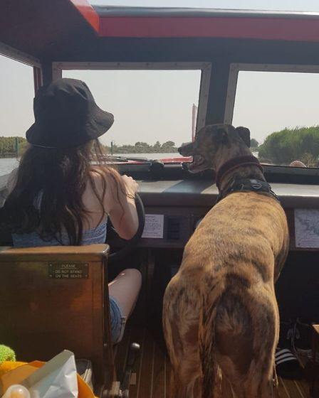 Clarence the rescue greyhound enjoying a trip on a Richardson's boat Picture: JO WILTSHIRE