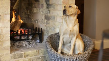 A four-legged customer at the Packhorse, Inn, Moulton Picture: CHESTNUT GROUP