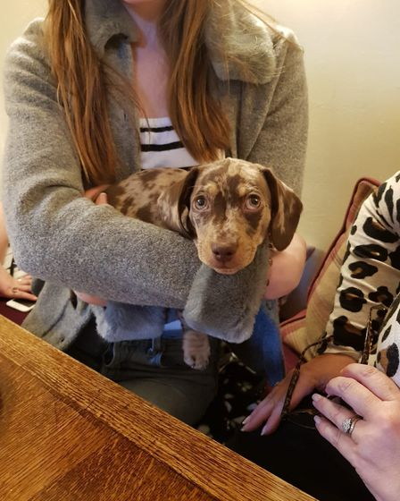 A visitor to the Turks Head pub in Hasketon Picture: THE TURKS HEAD