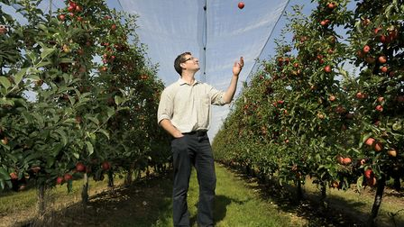 Robert Rendall in the orchards at Boxford Farm Picture: WARREN PAGE/ANGLIA PRESS AGENCY