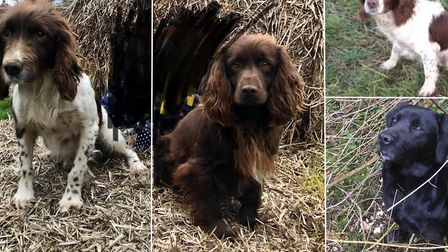 Four dogs, Roe, Bear, Boss and Viktor have been stolen from a family's home in Thorrington. Picture: