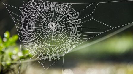 Spiders are more common at this time of year because it's their mating season. Picture: Getty Images