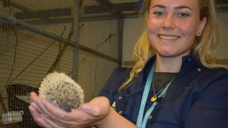 Animal Unit Technician team lader Jen Dow with Bramble the pygmy hedgehog. Picture: JOHN NICE