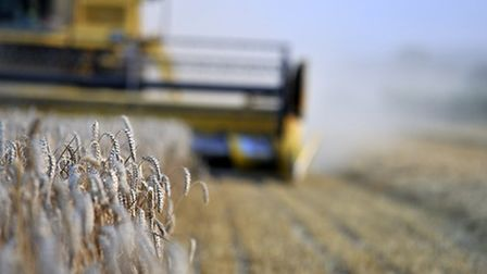 Wheat harvest in progress Picture: MARRIAGE'S