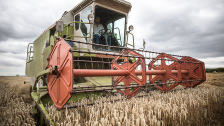 Wheat combining in progress Picture: MARRIAGE'S