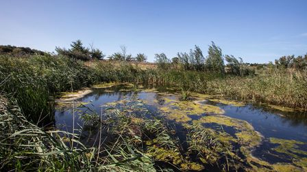 EDF are keen to offset the potential impact of Sizewell C with wildlife hotspots Picture: ANDREW HEN