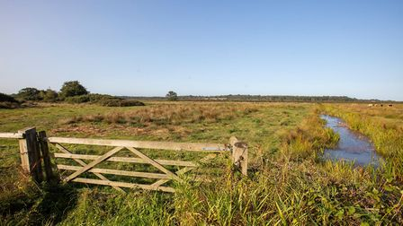 The fen meadows will be created in Halesworth and Benhall Picture: ADNREW HENDRY