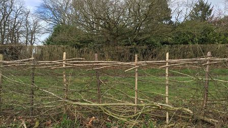 Hedge laying at Gressenhall Farm in February. Photo: Norfolk Museums Service
