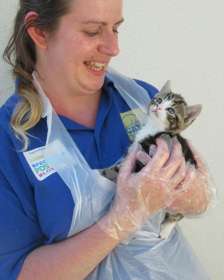Pickle the orphaned kitten and his three siblings have received round-the-clock care at Cats Protect