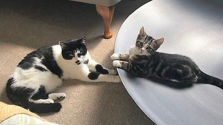 Luck has truly turned for three-month-old Pickle, who has found his forever home after being orphane