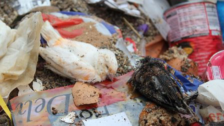 Two of the wild birds found amongst rubbish at the property