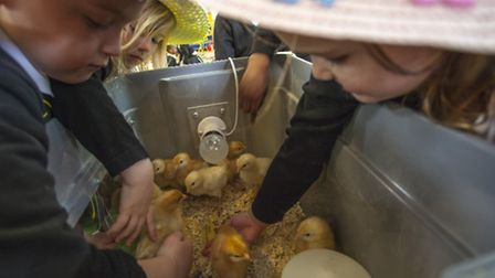 Pupils with the newly-hatched chicks