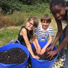Happy faces at a blackcurrant-picking event. PICTURE: Company Drinks