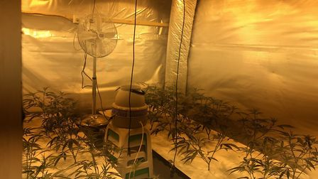 Outhouse converted into a cannabis factory. Picture: LBBD
