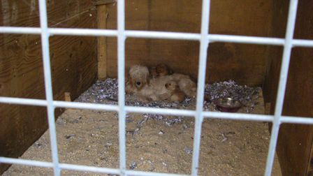 The dogs were kept in poor conditions Picture: RSPCA