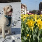 The same week, one year apart: Left, a dog enjoys the snow, and right, daffodils in Barking town cen