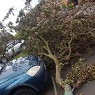 The tree was moved to get Huseyin out from underneath it. Picture: Huseyin Unsoy