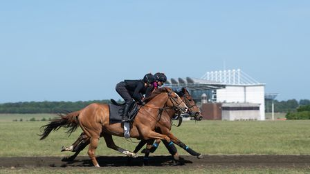 Racehorses gallop past the grandstand at Newmarket racecourse
