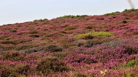 The National Trust is concerned by the potential impact of Sizewell C onDunwich Heath Picture: MARIO