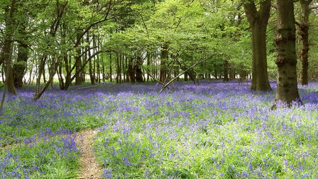 Captain's Wood in Sudbourne is an ideal spot to recharge in today's hectic and stressful world Pictu