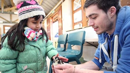 Farm worker Paul Tracey shows Rim Kasmane, aged four, a small chick at Mudchute City Farm.