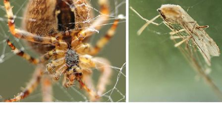 Great Bug Hunt... Spider and the Fly