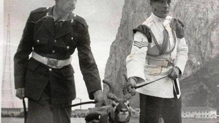 One of the photos on display at the Animals in the Armed Forces exhibition