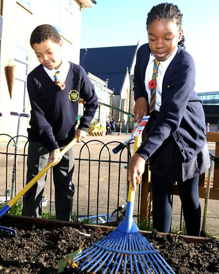 Poppy seed planting gets under way at St Mary & St Michael RC Primary