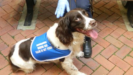 Paddy the working sniffer dog spent time at the Tower Hamlets Centre for Mental Health.