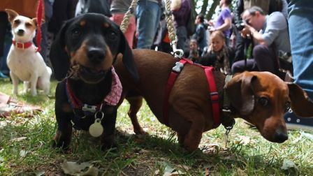 Daisy and Coco at the Shoreditch Dog Show