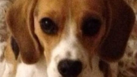 Molly the dog was returned seconds after a tweet from Britain's Got More Talent presenter Stephen Mu