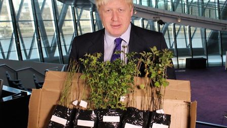 Boris Johnson... ready at City Hall to hand out saplings for schools to plant in their playgrounds